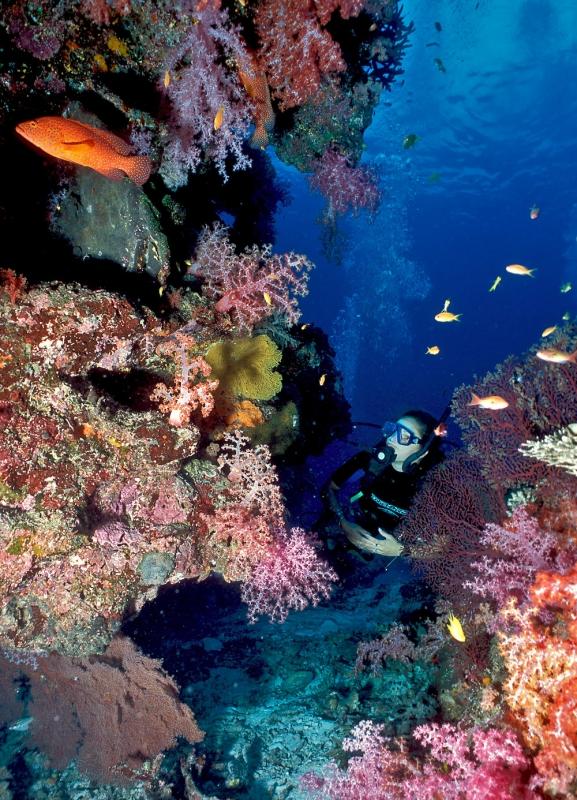 Колонии мягких кораллов