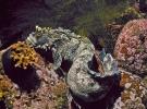 Японская мохнатоголовая собачка